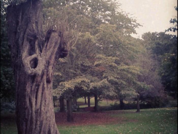 Dans un parc, aux alentours de chez moi.